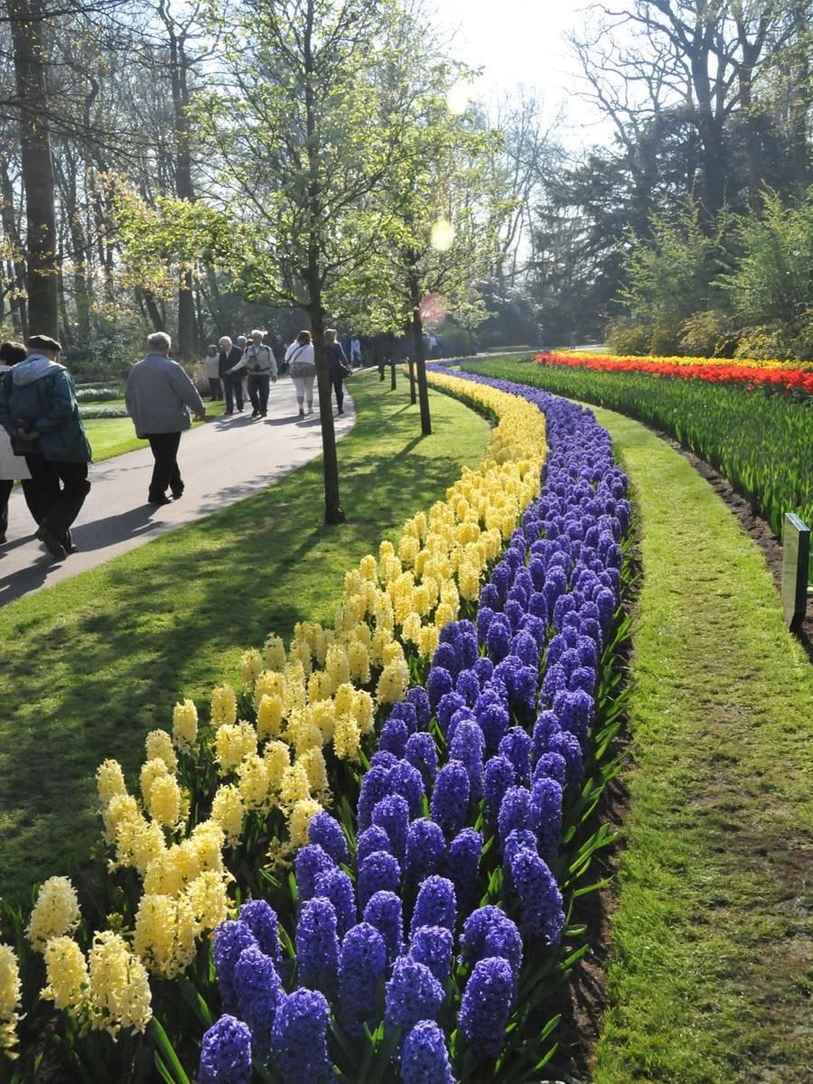 Рабатка в ландшафтном дизайне: создание цветника — полосы своими руками