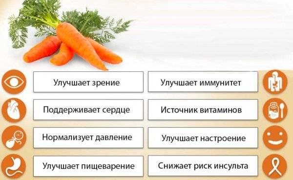 Морковь: польза и вред для организма   пища это лекарство