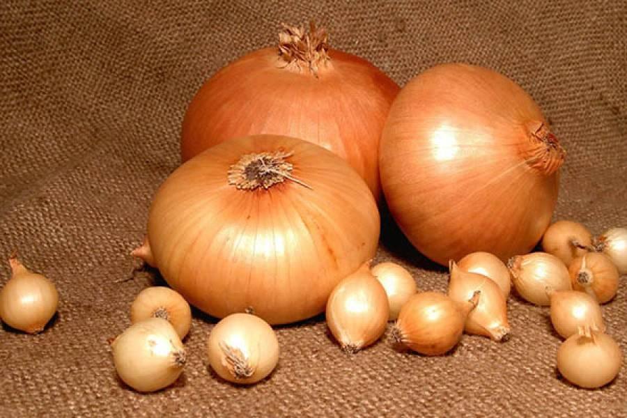 Популярный среди овощеводов лук стардаст. описание и правила выращивания
