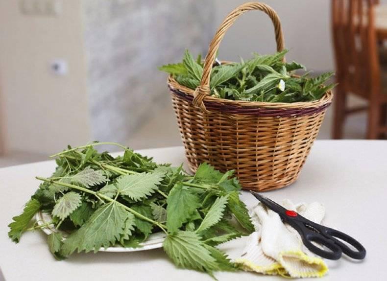 Крапива в качестве зеленого удобрения, как сделать удобрение из травы
