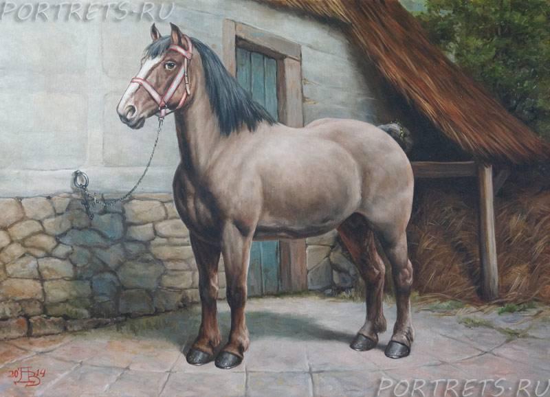 Тяжеловозные породы лошадей: название, описание и фото