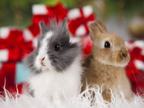 Можно ли давать кроликам одуванчики — selok.info