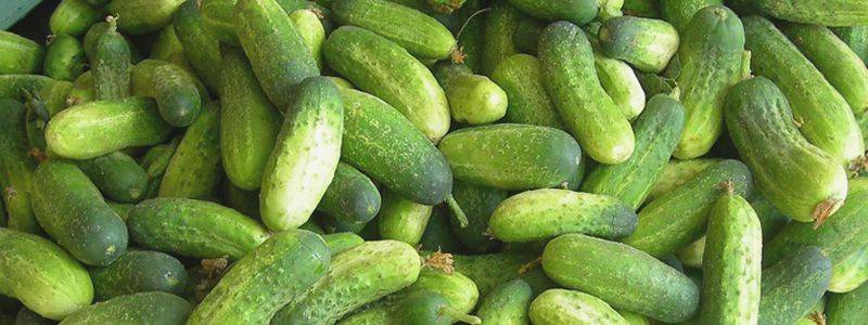 """Нитраты в овощах и фруктах: как определить наличие """"на глаз"""""""