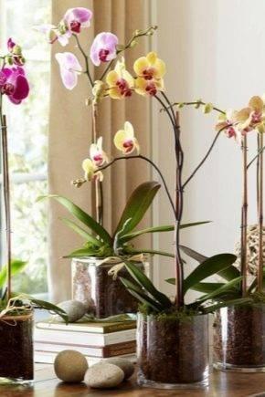 Какие особенности горшка Корона для орхидей