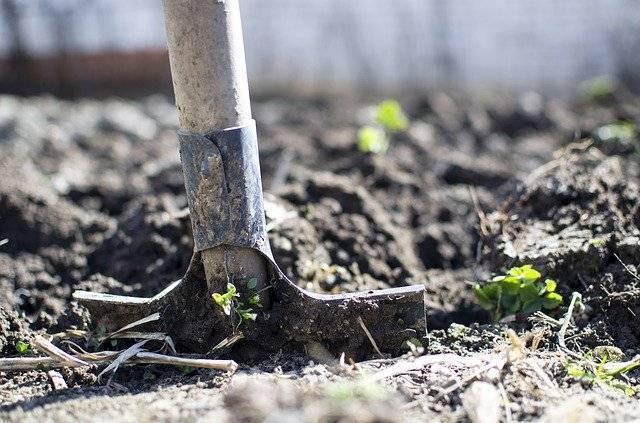Посадка чеснока осенью - готовим грядки под озимые сорта