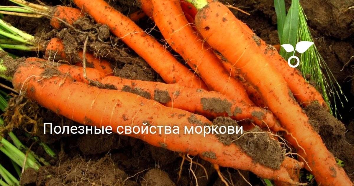 Витамины в моркови: таблица, бжу, какая польза и вред