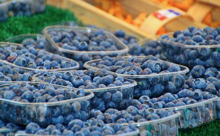 Голубика садовая: посадка и уход, фото, отзывы о выращивании голубика садовая: посадка и уход, фото, отзывы о выращивании