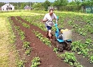 Веерное окучивание картофеля: особенности, пошаговое описание, отзывы