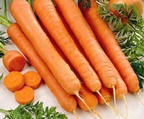 Посадка моркови под зиму (осенью 2017 года); как и когда правильно сажать морковь под зиму