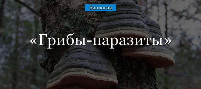 Доклад на тему грибы паразиты сообщение