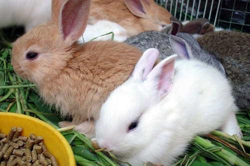 Бизнес план кролиководческой фермы с расчетами