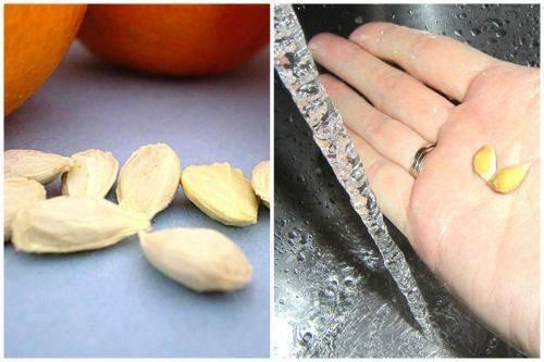 Секреты ухода за апельсиновым деревом в домашних условиях