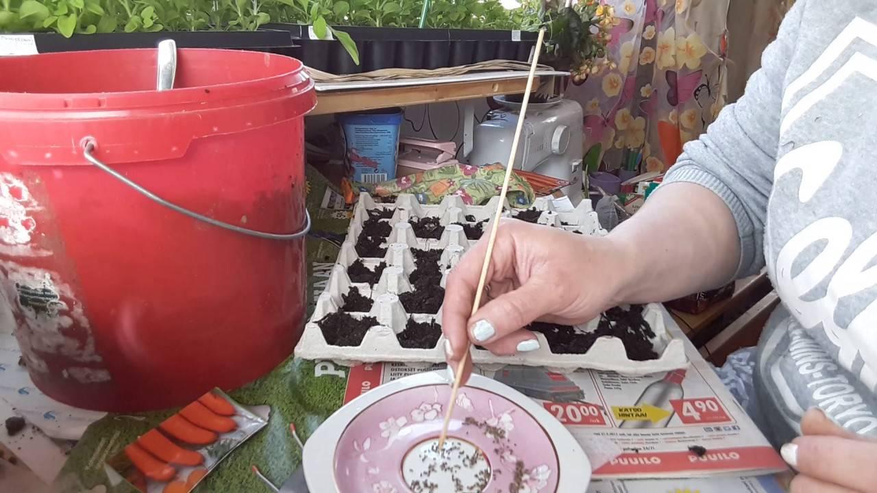 Способы посадки моркови: как выбрать лучший метод посева и когда осуществлять процедуру? русский фермер