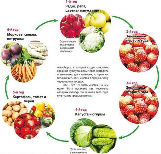 Первый посев в апреле-мае: свекла, морковь, редис. как правильно? когда сеять на грядки морковь, свеклу, редис