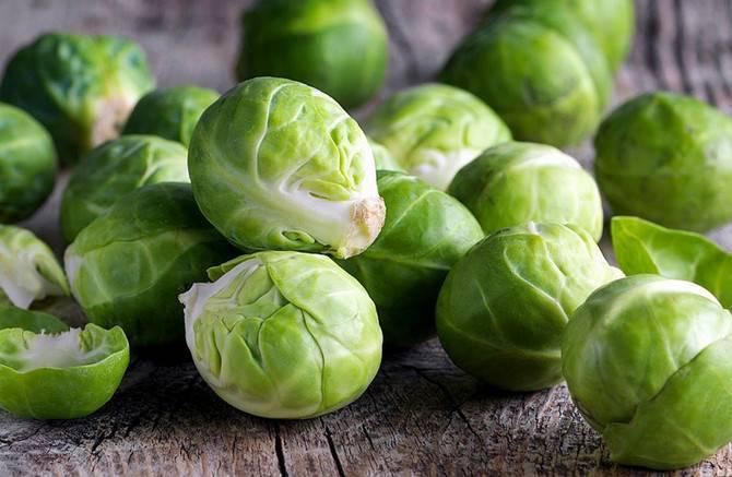 Как вырастить брюссельскую капусту на рассаду и в открытом грунте - рекомендации на ydoo.info