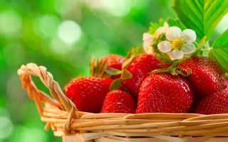 Повышаем урожайность клубники в приусадебном садоводстве