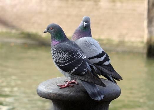 Отпугиватель птиц своими руками – статья – otpugiwateli.ru