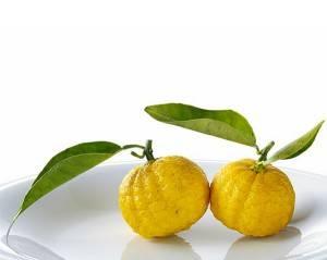 Юдзу или юзу японский лимон всезнайкин - агро журнал dachnye-fei.ru
