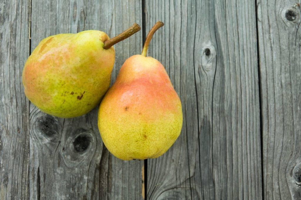 Ах, недаром славится брянская красавица: обзор популярного сорта груши