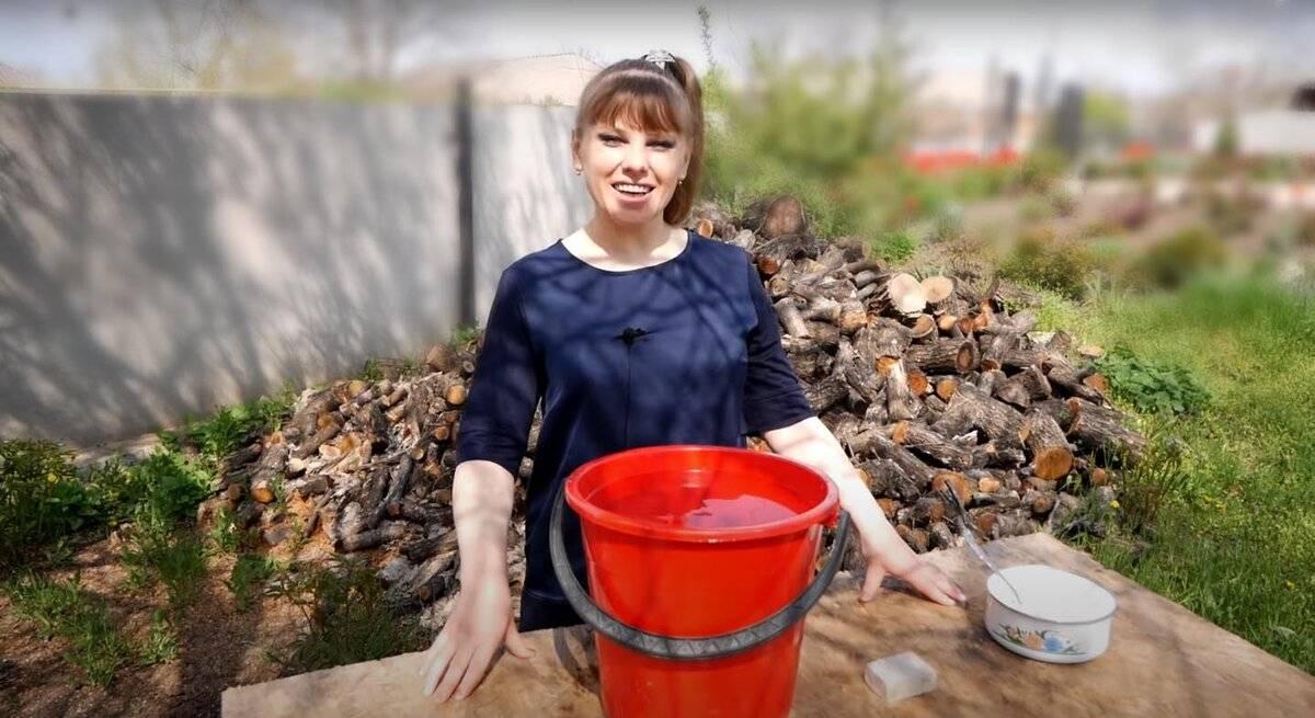 Чем подкормить баклажаны после высадки в грунт