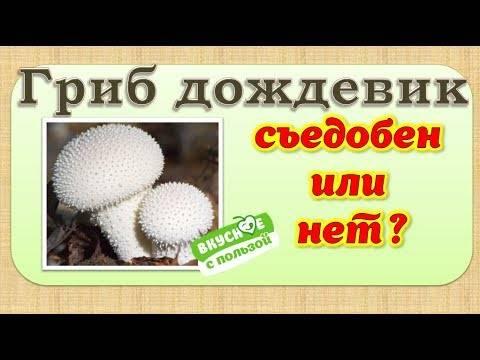 Съедобность и описание грибов горькушек (+25 фото)
