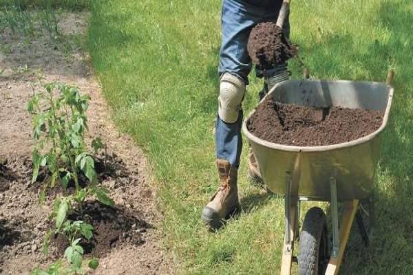 Удобрения для картофеля — какие лучше применять при посадке