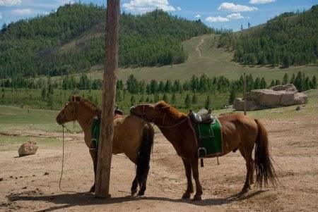 Монгольская порода лошадей: характеристика, содержание и уход