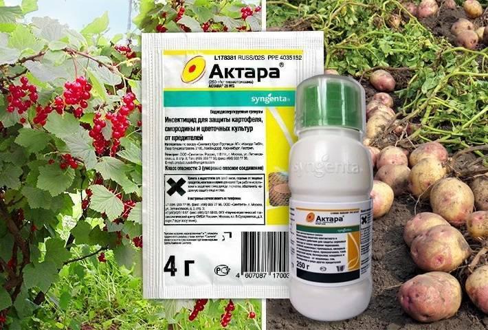 «актара» для комнатных растений: как разводить и применять?