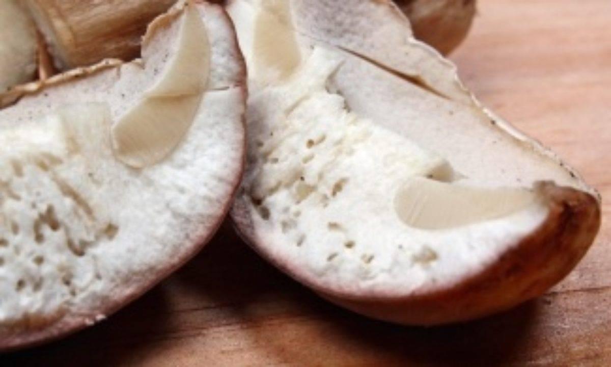 ᐉ едят ли черви ядовитые и несъедобные грибы