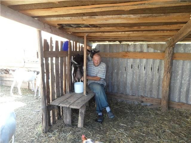 Как быстро и просто сделать станок для доения коз