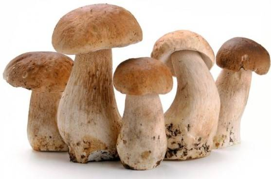 Как сушить белые грибы в домашних условиях: особенности правильной сушки боровиков на зиму