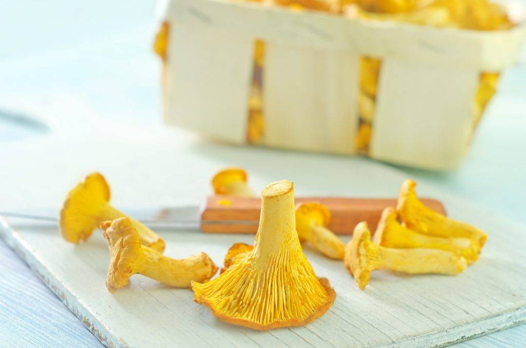 Лисичка трубчатая – вид пластинчатых грибов: фото и описание