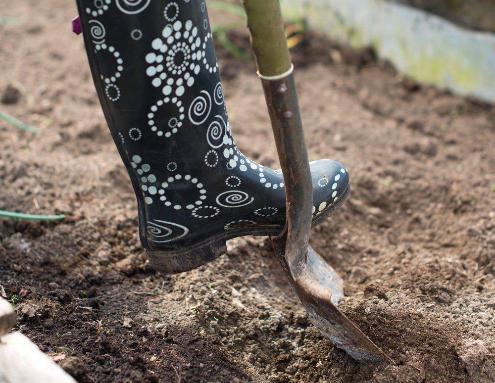 Сапропель: что это такое и как правильно использовать удобрение, типы, состав