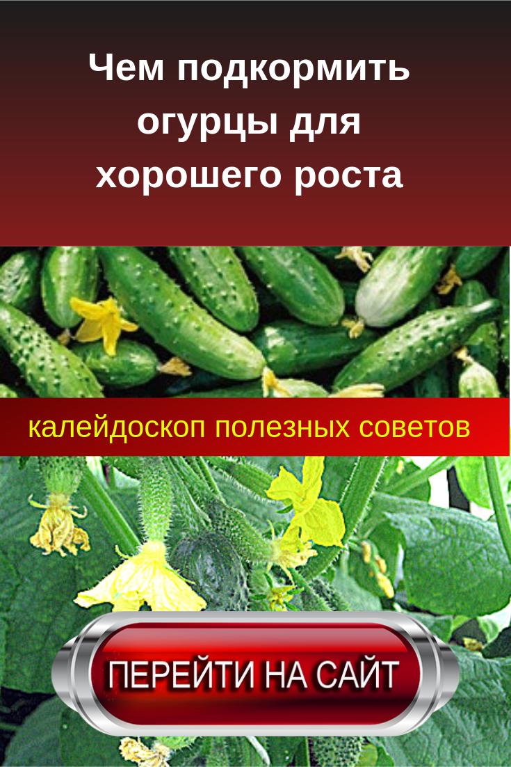 Чем подкормить огурцы в теплице для роста после недели посадки для плодоношения народные средства видео