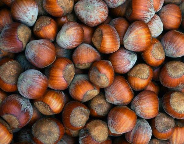 Лещина — лесной орех