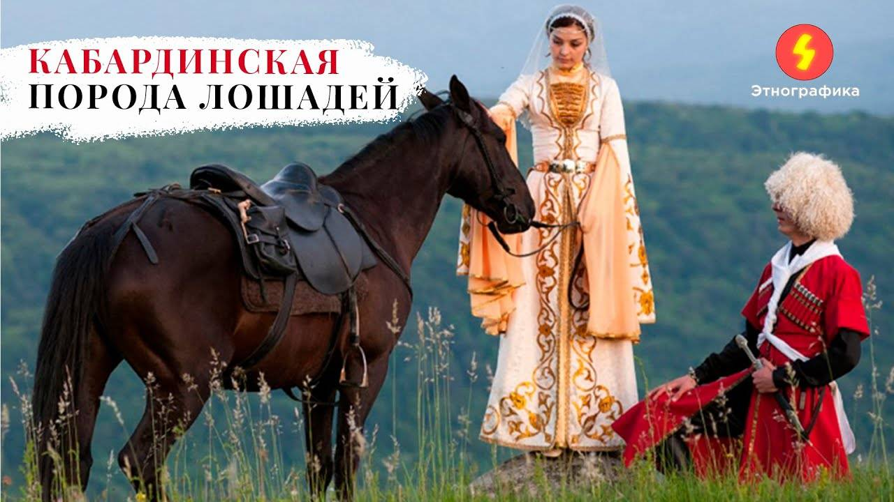 Кабардинская порода лошадей: ее обзор, видео и фото кабардинская порода лошадей: ее обзор, видео и фото