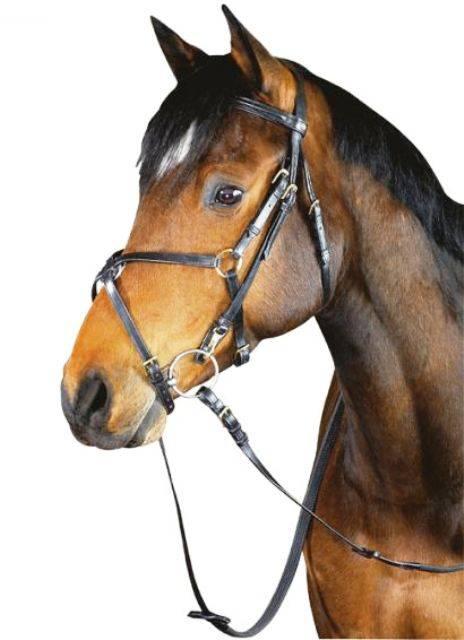 Недоуздок для лошади