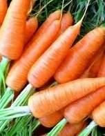 Фиолетовая морковь-интересный овощ на вашем огроде