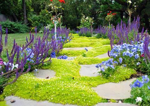 Мшанка шиловидная (39 фото): посадка и уход в открытом грунте, выращивание «ирландского мха» из семян, описание сортов «ауреа» и «грин мосс», использование в ландшафтном дизайне