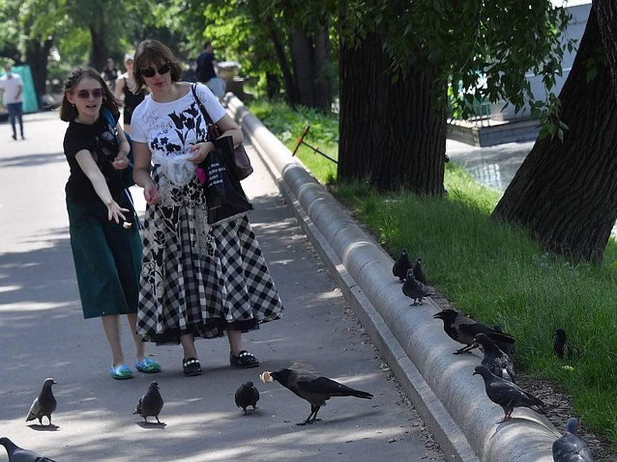 Какие бывают болезни голубей?