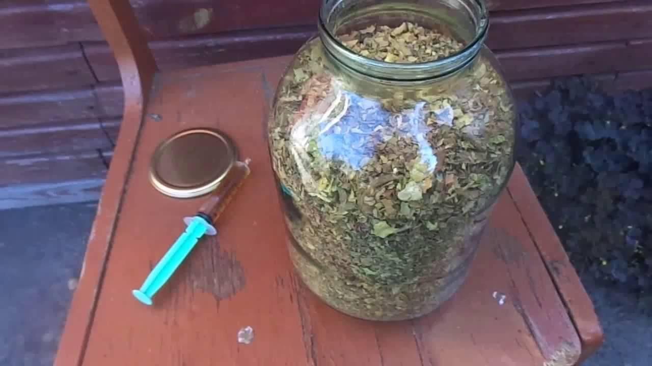 Как вырастить курительный табак в домашних условиях
