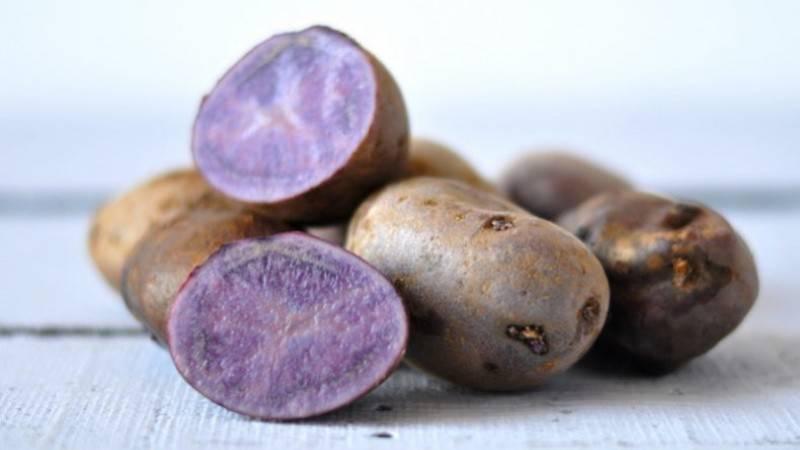 """Картофель """"цыганка"""": описание сорта, фото, характеристики и выращивание русский фермер"""