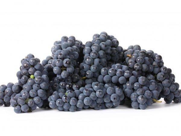 Виноград кишмиш: полезные свойства, витамины, калорийность, количество сахара. чем полезен виноград кишмиш для беременных, повышает ли он сахар в крови?