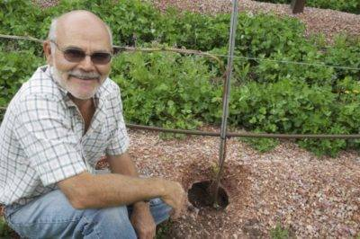 Правильная посадка саженцев винограда осенью: когда и как лучше сажать