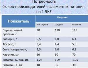 Особенности кормления быков производителей