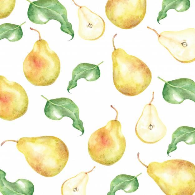 Груша обыкновенная. плодовые деревья. фото, описание кроны и плода груши