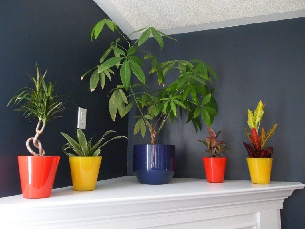 Теневыносливые комнатные растения с фото и названиями