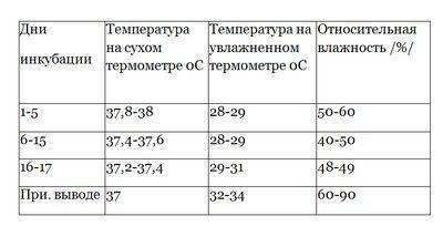 Температура инкубации перепелов: какая должна быть