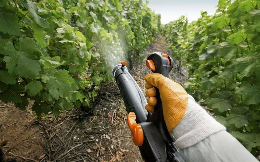 Обработка винограда осенью перед укрытием на зиму: чем опрыскивать?
