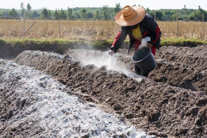 Кислая почва - что делать, какие удобрения использовать